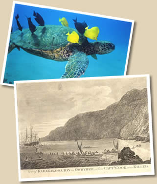 Historical etching from Captian Cook, sea turtle and tropical fish